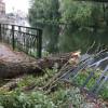 O cracă de plop s-a prăvălit peste promenadă