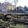 Comisarii de mediu au sistat orice intervenţie în Parcul Bălcescu - Defrişări masive în parc