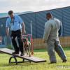 """""""Un câine recunoscător valorează mai mult decât un om nerecunoscător"""" - Alexandru Bondar şi relaţia om-câine"""