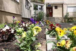 Pe strada Episcop Ioan Suciu din Oradea - Grădina cu sute de flori