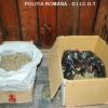 Reţinuţi de poliţiştii bihoreni - Cultivau canabis într-o seră din Tinca