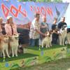 Oradea Dog Show, ediţia 2017 - Parada câinilor la Băile 1 Mai