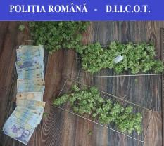 Bărbat suspect de trafic cu droguri de risc - Prins cu cannabis, în flagrant delict