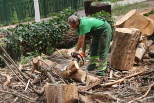 Alte defrişări pe malul Crişului Repede - Arbori puşi la pământ