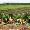 Accesarea subvenţiilor APIA - Respectarea normelor agricole pentru climă şi mediu
