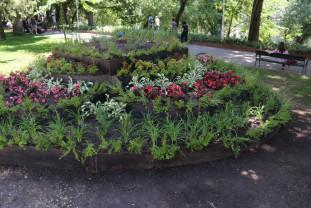 Flori noi pentru orădeni, în Parcul Libertăţii - Mozaicul uriaş a fost finalizat