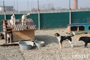 Oradea este oraşul cu cel mai mic număr de câini fără stăpân pe străzi - O problemă aproape rezolvată