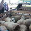 În acest an, în Piaţa din Ioşia - Mieii se vând la 13 lei kilogramul
