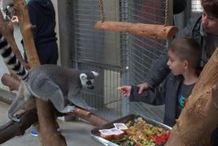 Un eveniment ajuns la cea de-a zecea ediție - Ziua părinților adoptivi, la Zoo Oradea