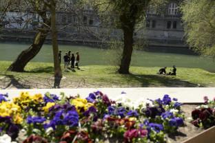 """Mii de flori colorează frumos orașul - Oradea sub """"asediu"""""""