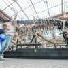 Schelet de dinozaur, vândut cu 1,4 mil euro