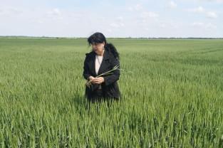 DAJ Bihor. Starea de vegetaţie a culturilor agricole