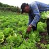 MADR: Finanţări europene – Trei măsuri pentru fermierii care utilizează terenuri agricole