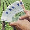 MADR: Plăţile pe agromediu - prevederi importante