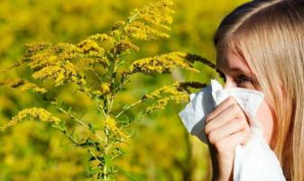 Înfloreşte ambrozia - Amenzi mari pentru terenurile infestate