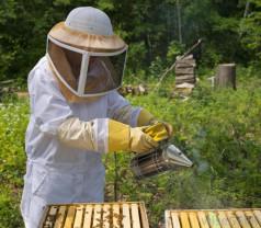 Programul Naţional Apicol se modifică - Beneficii pentru crescătorii de albine
