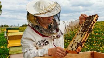 CE. Ajutoarele din apicultură - Derogare la control