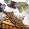 Sprijinul pentru apicultori: Depunerea cererilor de sprijin începe la 1 august