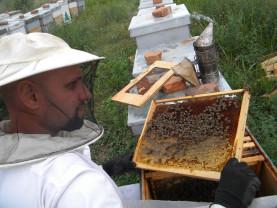 Noua Lege a apiculturii a fost promulgată - Sancţiuni drastice pentru falsificarea mierii