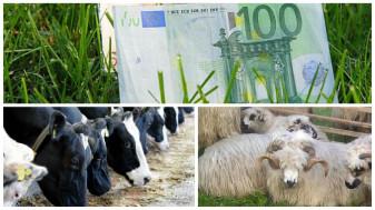 Până la 30 noiembrie - Asigurarea culturilor și animalelor