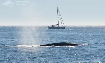 Coastele spaniole ale Oceanului Atlantic. După o absenţă de 40 de ani - Au revenit balenele albastre