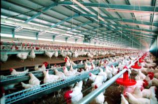MADR. Bunăstarea păsărilor - Termen limită la depunerea cererilor