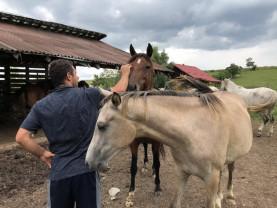 Locul din România unde animalele fără nicio șansă devin campioane - Refugiul Caii Lupilor