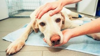 Norvegia. Câinii de companie, afectaţi de o boală misterioasă - Căţeii mor pe capete