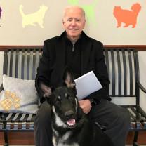 Câinele preşedintelui SUA a muşcat din nou şi ia ia lecţii de bună purtare - Negru, fioros şi rău