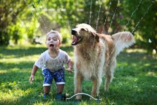 """Un an din viaţa unui câine nu este egal cu şapte ani umani - Câinii sunt """"bătrâni"""" de mici"""