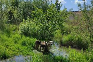 Lugașu de Jos - Câini salvați din baraj