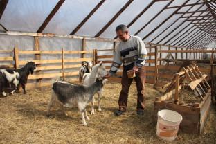 APIA. Creşterea caprinelor - Condiţii pentru acordarea Sprijinului cuplat