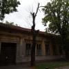 Un ecologist critică toaletarea excesivă a arborilor în Oradea - Se usucă arborii oraşului!