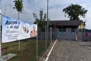 Târg de adopții la Adăpostul Grivei - Pentru cei cu inima mare