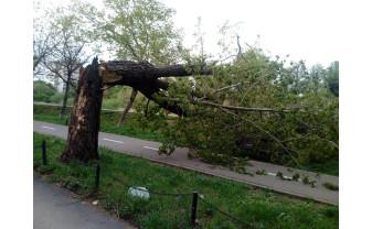 Ecologiștii avertizează. Pe malul Crișului Repede, a început marea defrișare!