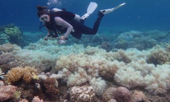 Marea Barieră de Corali de lângă Australia încă suferă - În proces de recuperare