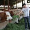 MADR: Noutăţi privind ajutorul de stat acordat crescătorilor de animale