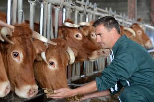 ANSVSA. În perioadele caniculare - Reguli obligatorii pentru crescătorii de animale
