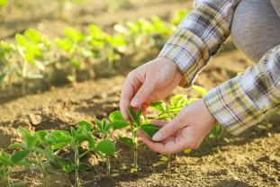 APIA a stabilit sumele pe hectar - Bani pentru fermierii