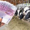Sprijinul cuplat taurine de carne - Condiţii de eligibilitate, documente necesare