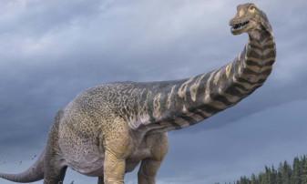 Cel mai mare dinozaur descoperit în Australia, identificat oficial - Aparţine unei noi specii