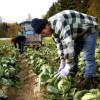 AFIR: PNDR 2020 - Facilități suplimentare pentru finanțarea fermelor mici