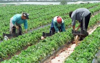 MADR. Modernizarea fermelor - Accesarea sprijinului
