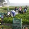 APIA: În aprilie, accesarea fondurilor europene de către fermele mici