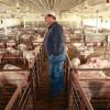 Sprijin pentru bunăstarea animalelor - Termen limită 15 februarie