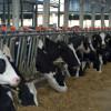 ANSVSA: în perioadele friguroase - Recomandări pentru protejarea animalelor