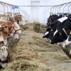ANSVSA: Noi reguli pentru producerea şi comercializarea hranei pentru animale