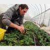 MADR: Dovedirea calităţii de fermier activ