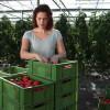 PNDR: Fonduri nerambursabile pentru fermierii care se asociază cu comercianți de produse agricole