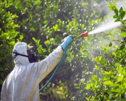 Buletin de avertizare fitosanitar - Tratamente pentru măr, păr şi gutui